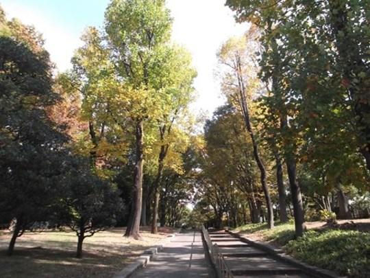 お知らせ 代々木公園 公園へ行こう!