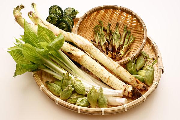 山菜は春のごちそう。冬眠していた体を目覚めさせる栄養が豊富です !!