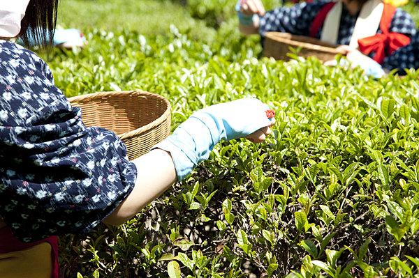 今年は5月2日! 「♪ 夏も近づく八十八夜~」の本当の意味を知っていますか?(tenki.jpサプリ 2015年4月30日) - 日本気象協会 tenki.jp