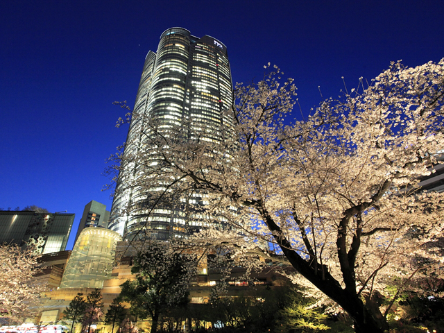 桜のライトアップ 2016