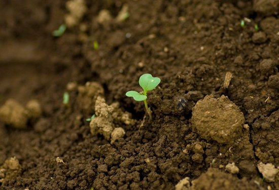 今日は4月16日(旧暦3月10日)の土曜日 「土用の入り(どようのいり)」