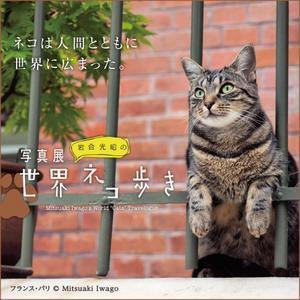 【予告】[7階催事場]ネコは人間とともに世界に広まった。写真展「岩合光昭の世界ネコ歩き」
