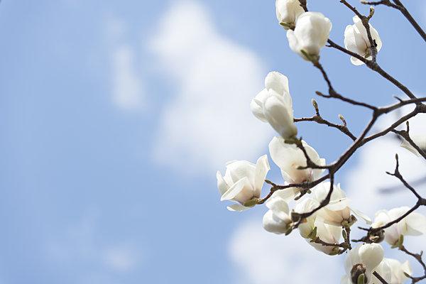 二十四節気「春分」は、自然をたたえ生物をいつくしむ祝日「春分の日」(tenki.jpサプリ 2017年3月20日) - 日本気象協会 tenki.jp