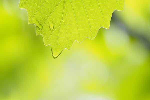 二十四節気「穀雨」。春の雨が降るたび新緑が輝くころ(tenki.jpサプリ 2017年4月20日) - tenki.jp