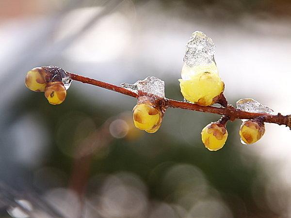 歳時記「冬土用」~冬から春への移り変わる季節(tenki.jpサプリ 2017年01月17日) - tenki.jp
