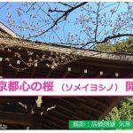 東京 ソメイヨシノ開花(日直予報士)