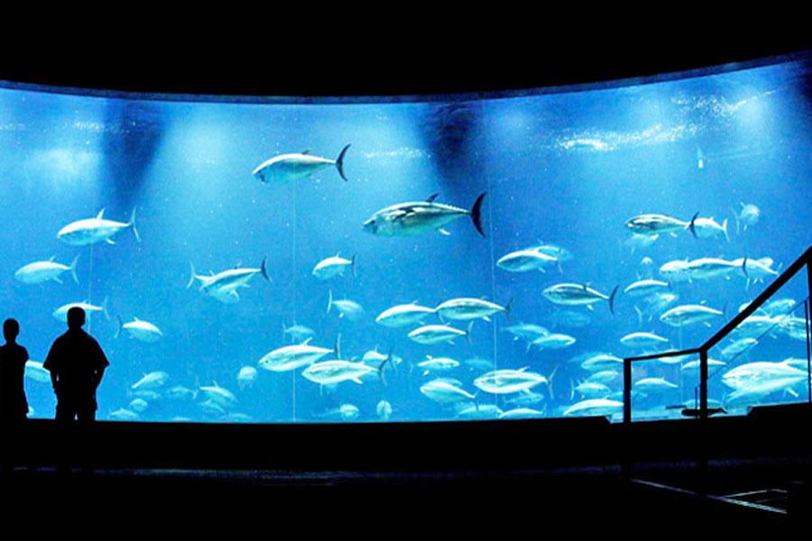 【2018年最新版】5/4「みどりの日」の入場無料スポット17選♪水族館・動物園など、GWの東京0円デート|レッツエンジョイ東京