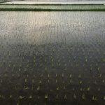 2019年4月20日は穀雨(こくう)です。 | お天気.com