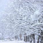 2020年1月20日は大寒(だいかん)です。 | お天気.com