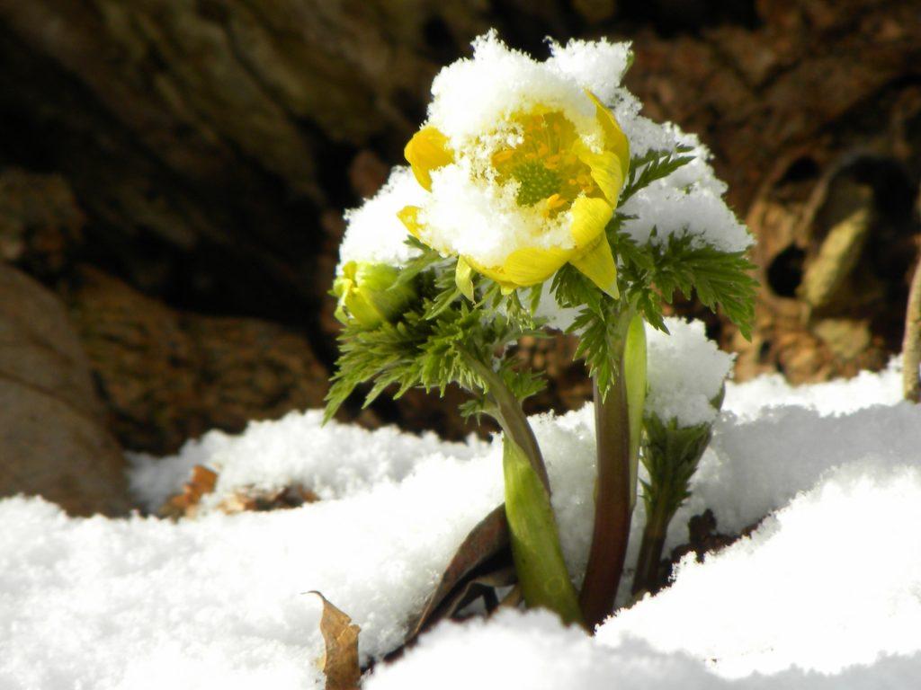 2020年2月4日は立春(りっしゅん)です。 | お天気.com